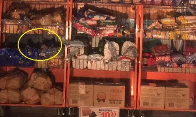 Rats Spotted Getting Comfy on Bread Racks at Famous Local Mart - World Of Buzz