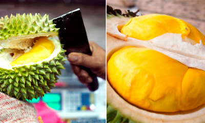 Bentong, Famous For Musang King Durian Chosen to Hold Global Durian Festival in November - WORLD OF BUZZ