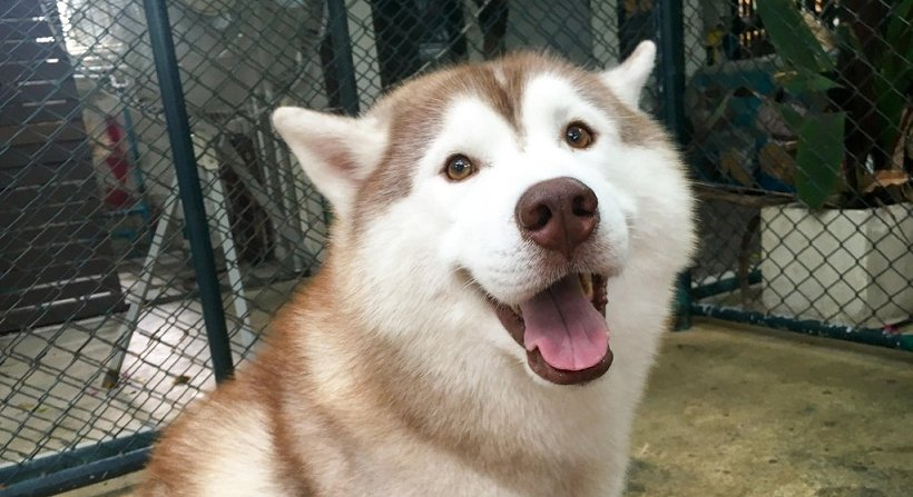 First Husky Cafe In Kl Officially Opens And We Can't Be Anymore Excited! - World Of Buzz 1