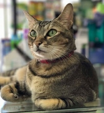 "Hong Kong Authorities Want to ""ARREST"" This Cat For Allegedly Hurting Little Boy - WORLD OF BUZZ 2"