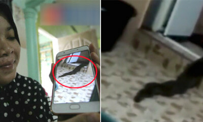Video of Snake Slowly Crawling Out of Toilet in Malaysian House Will Make You Freak Out! - WORLD OF BUZZ