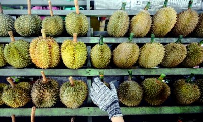"Lawmaker Wants ""Durian Discount Cards"" for Penangites Due to Increasing Prices - WORLD OF BUZZ 1"
