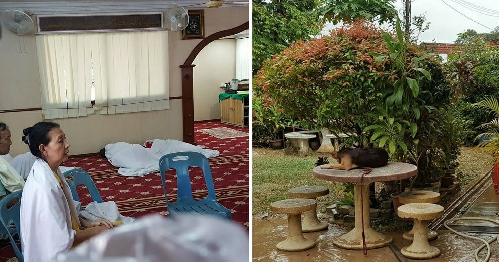 Penang Surau Also Took in Dogs Affected by Floods - WORLD OF BUZZ
