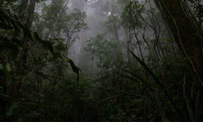 [TEST] 8 Jungle-Related Superstitions Malaysians Have Heard From Their Elders - WORLD OF BUZZ