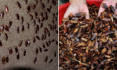 This Farm Proves Cockroaches are Environmental-Friendly with 300 Million of Them - WORLD OF BUZZ 6