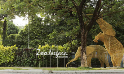 If Your Birthday Falls in December, You Can Visit Zoo Negara for Free! - WORLD OF BUZZ 7