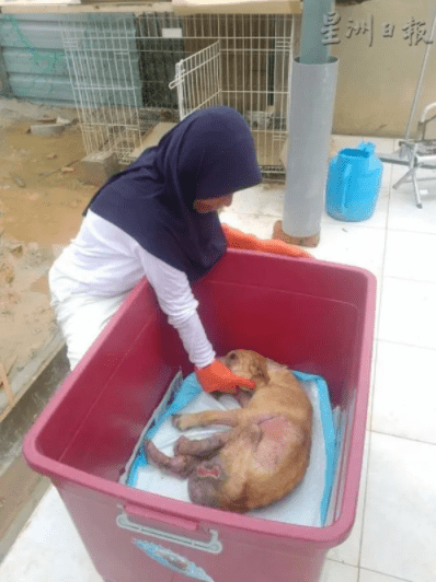 Kind M'sian Saves And Cares For Stray Dogs Although There Are Religious Taboos - World Of Buzz 2