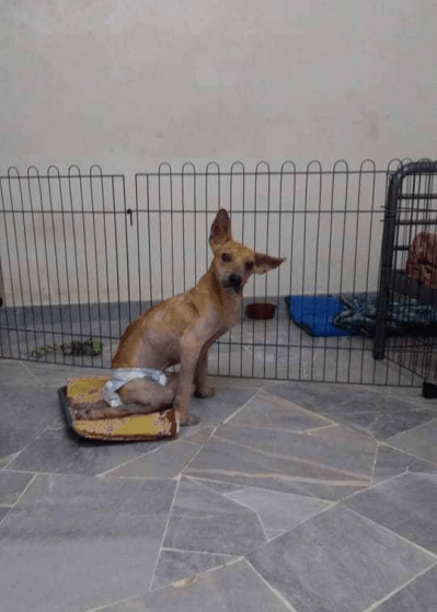 Kind M'sian Saves And Cares For Stray Dogs Although There Are Religious Taboos - World Of Buzz 3
