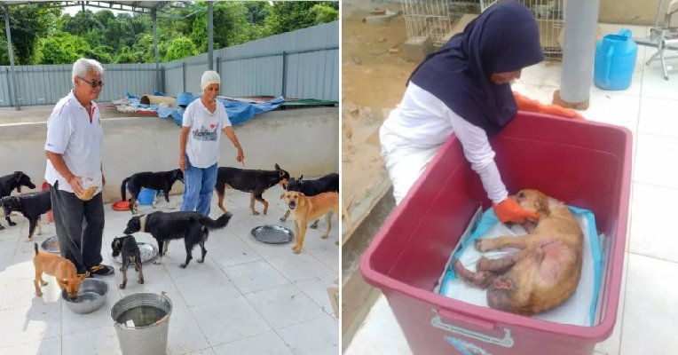 Kind M'sian Saves And Cares For Stray Dogs Although There Are Religious Taboos - World Of Buzz 4