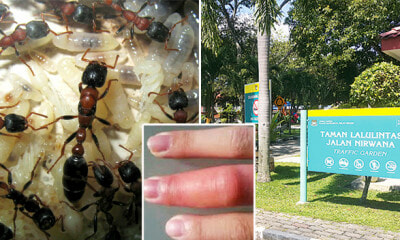 Parks and Bus Stops in Penang are Infested with 'Fire Ants', Locals and Tourists Warned - WORLD OF BUZZ