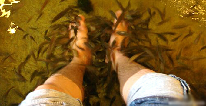 Man with Stinky Legs Goes for Fish Pedicure, Ends Up Killing All the Fish - WORLD OF BUZZ