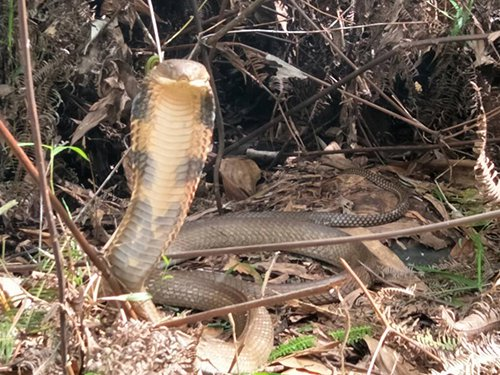 M'sian Warns Other Hikers After Discovering Over 10-Foot Long Snake on Hiking Trail - WORLD OF BUZZ