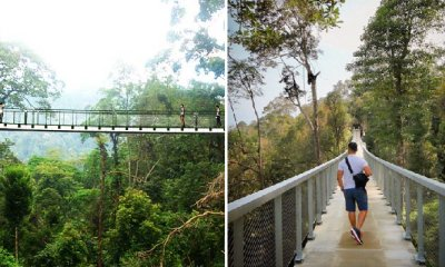 New Ribbon Bridge Located 700m Above Sea Level Opens in The Habitat, Penang Hill - WORLD OF BUZZ 8