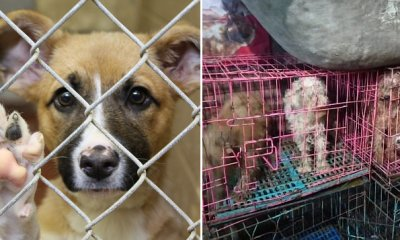 Dogs at These Puppy Mills Are Forced to Live in Tiny Cages and Mate All Day & Night - WORLD OF BUZZ
