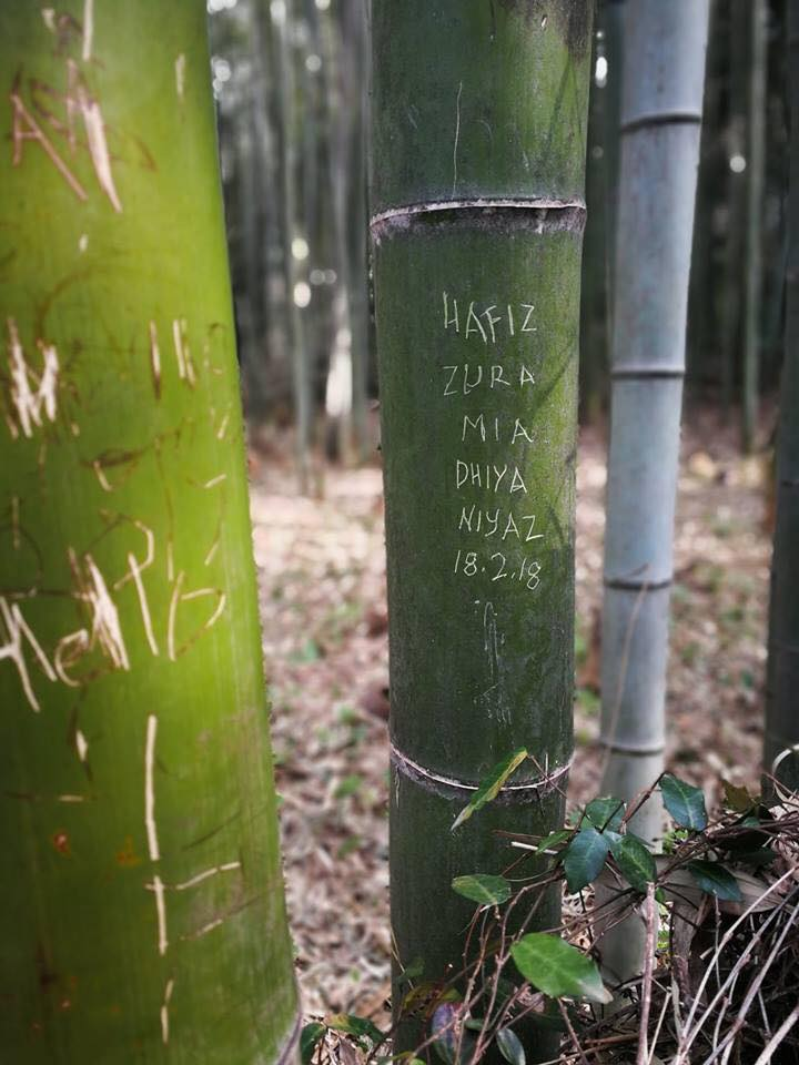 Malaysian Tourists Allegedly Carve Names on Bamboo in Japan - WORLD OF BUZZ 1