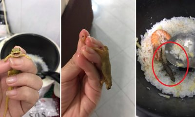 M'sian Girl Catches Three Lizards Using Bare Hands in Seafood Porridge - WORLD OF BUZZ 5