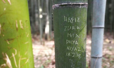M'sian Tourists Allegedly Vandalise Bamboo at Japan UNESCO Heritage Site - WORLD OF BUZZ