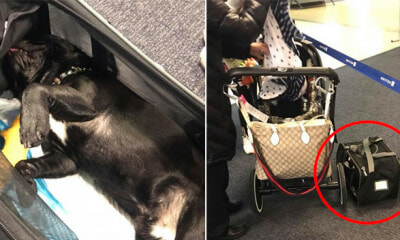 10yo Puppy Suffocated to Death After Flight Attendant Asked Owner to Put It in - WORLD OF BUZZ