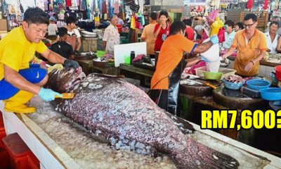 This 152kg Giant Grouper Costs RM7,600 and a Malaysian Guy Actually Bought It! - WORLD OF BUZZ