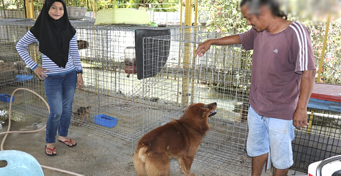 This Malay Family has a Four Big Dogs, Including a Wolfhound and a Husky! - WORLD OF BUZZ