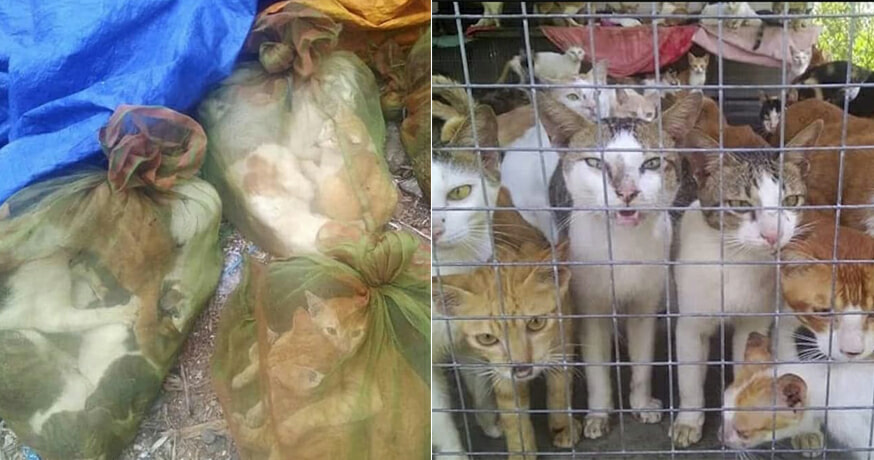 Illegal Trade of Dog and Cat Meat Are Expanding In M'sia, And It's Terrifying - WORLD OF BUZZ