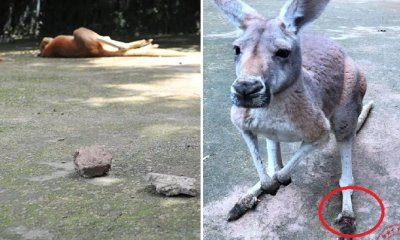 Inconsiderate Zoo Visitors Kills Kangaroo By Throwing Bricks Just to See Her Jump - WORLD OF BUZZ 3