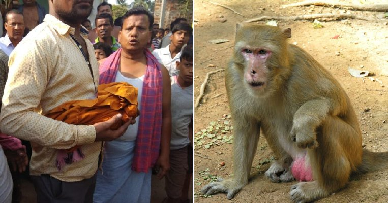 Monkey Believed to Have Killed Newborn Baby After Kidnapping Him from Cradle - WORLD OF BUZZ 3