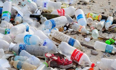 Scientists Discover New Enzyme That Could Decompose Plastic Waste Forever - WORLD OF BUZZ