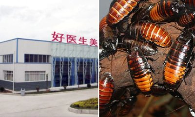 World's Largest Roach Farm Breeds 6 Billion Cockroaches a Year for 'Healing Potion' - WORLD OF BUZZ 6