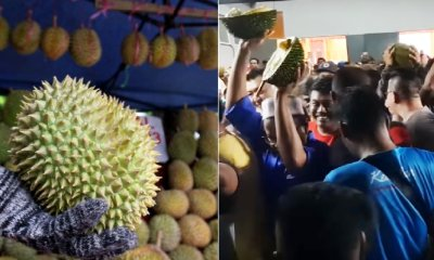 Durian Orchard Owner Gives Away Nearly 1k Durians to Celebrate Pakatan Harapan's Win - WORLD OF BUZZ 5