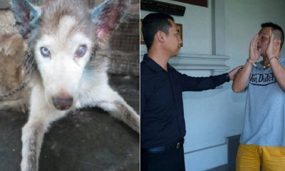 M'sian Guilty of Neglecting Own Husky Jailed & Fined RM8,000 For Animal Cruelty - WORLD OF BUZZ