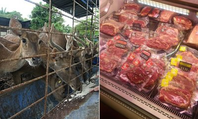 Guys! Beware Fake Venison Are Being Sold in Msia at RM35/kg This Raya - WORLD OF BUZZ