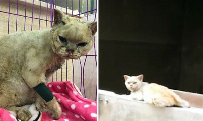 Loyal Cats Waits for Dead Owner to Return Despite Being Severely Injured in Fire - WORLD OF BUZZ