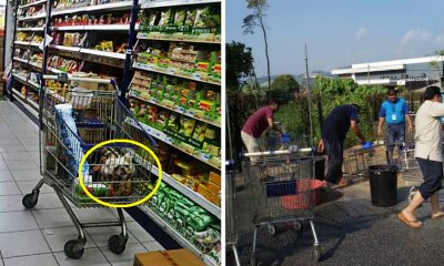 Pahang Supermarket Had to Wash All Of Their Trolleys After A Customer Kept Her Dog in One - WORLD OF BUZZ