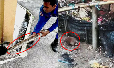 Special Needs Centre Plagued by Rat & Snake Infestation Since 2010, DBKL Not Helping - WORLD OF BUZZ