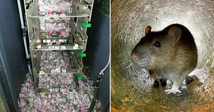 Rats Nibble Through RM72,000 Worth of Cash After Breaking Into ATM Machine - WORLD OF BUZZ