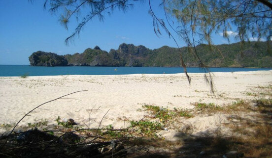 Tourist Died After Getting Stung by Jelly Fish in Pulau Langkawi - WORLD OF BUZZ 1
