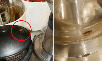 Cockroaches Found Crawling on Drink Counter and Near Coffee Machine in Melaka Steakhouse - WORLD OF BUZZ