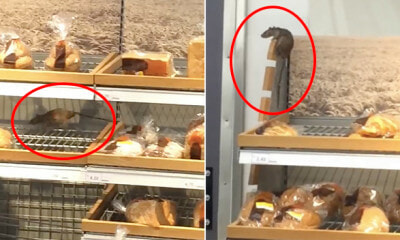 Viral Video Shows Sizeable Rat Crawling on Bread Racks at Setia Alam Hypermarket - WORLD OF BUZZ