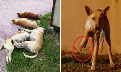 Stray Dogs in Shah Alam Are Cruelly Being Poisoned to Death and Their Limbs Chopped Off - WORLD OF BUZZ 8