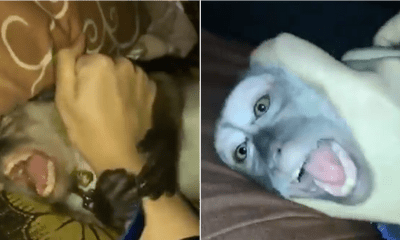 Watch: Girl Allegedly Abuse Her Pet Monkey, Causes Uproar - WORLD OF BUZZ 3