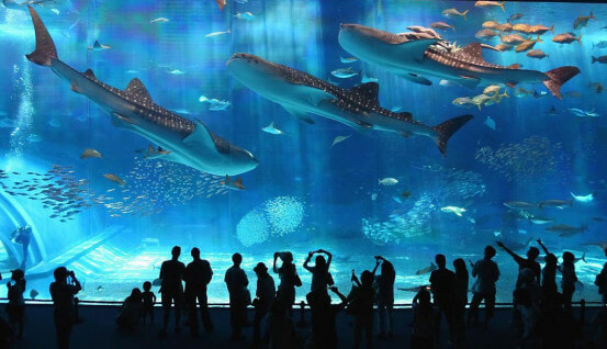 8 Awesome Osaka Attractions You Must See for The Total Japan Experience - WORLD OF BUZZ 20