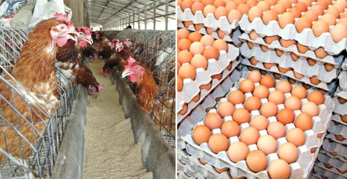 Each Tray of Eggs in Selangor and KL Now Cost RM1.20 More, Here's Why - WORLD OF BUZZ