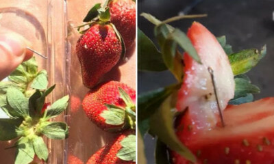 MoH Will Be Checking All Australian Strawberries For Needles Before Being Allowed into Malaysia - WORLD OF BUZZ 3
