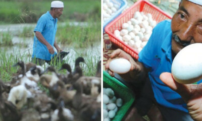This Malaysian Man Earns RM12,000 a Month By Just Selling Duck Eggs! - WORLD OF BUZZ 3