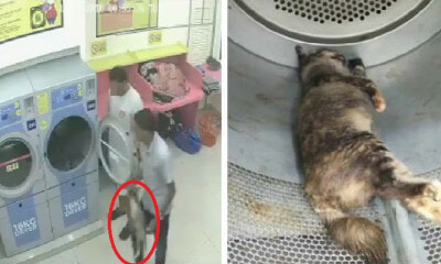 Two Cruel M'sians Caught on CCTV Trapping Pregnant Cat in Dryer and Killing Her - WORLD OF BUZZ 6
