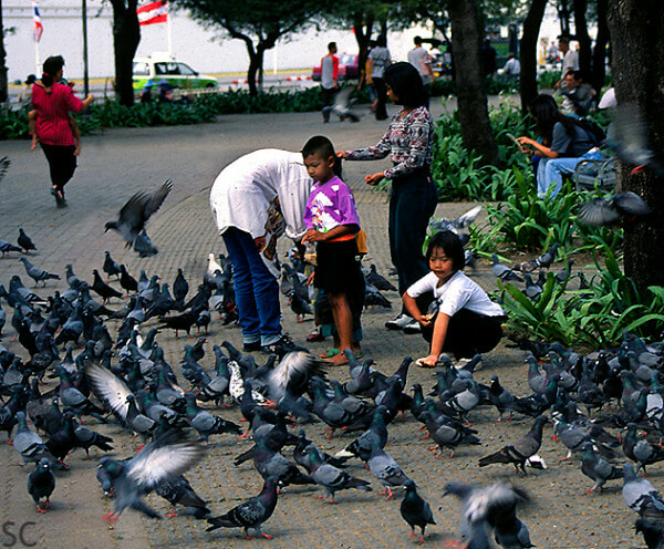 You Can Get Fined Over RM3,000 or Even Jailed For Feeding Pigeons in Thailand - WORLD OF BUZZ 1
