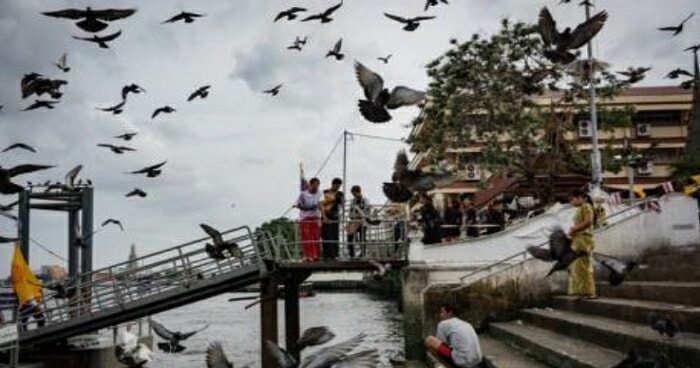 You Can Get Fined Over RM3,000 or Even Jailed For Feeding Pigeons in Thailand - WORLD OF BUZZ 2