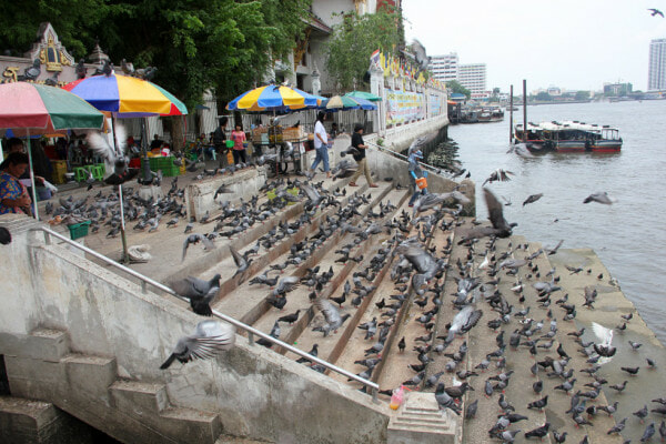 You Can Get Fined Over RM3,000 or Even Jailed For Feeding Pigeons in Thailand - WORLD OF BUZZ