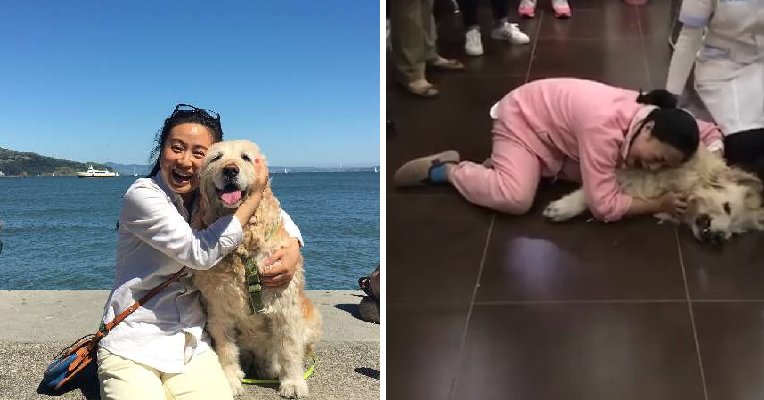 """""""I Can Never Forget Her Screams and Cries,"""" Owner Says After Dog Was Poisoned to Death by Neighbour - WORLD OF BUZZ 7"""